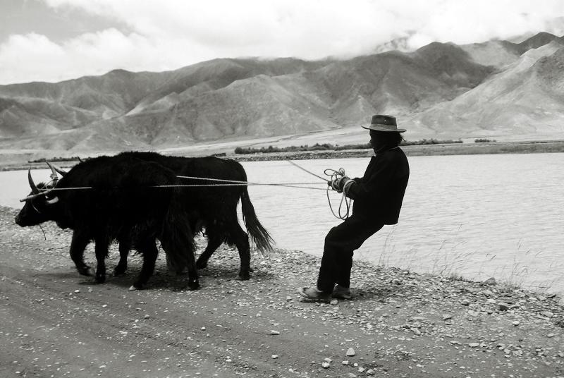 4 Sonia Costa_ Tibetan plateau