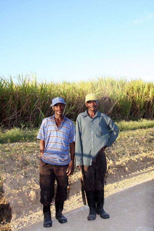 9 Sonia Costa_sugar cane