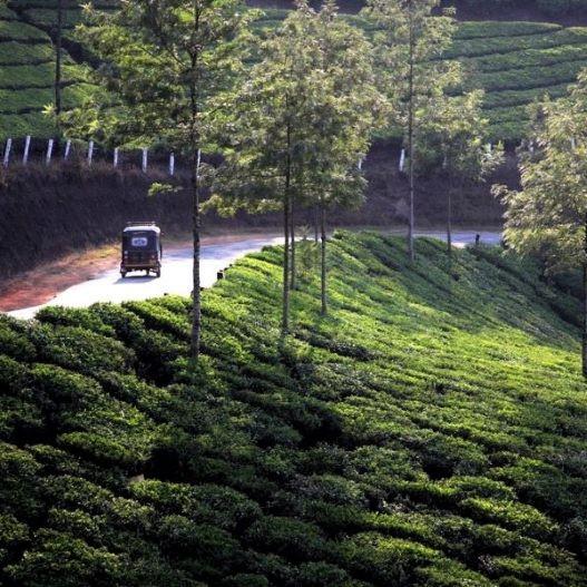copertina Landscapes, India
